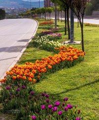 Safranbolu Çiçek Açıyor